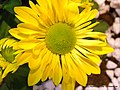 Flor (4572869442).jpg