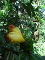 Flora in Kerala 07.jpg