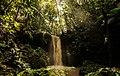 Floresta no Acre.jpg