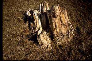 Florissant Fossil Beds National Monument FLFO1238.jpg
