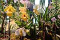 Florissimo 2015 031.jpg