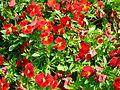 Flower-center142726.jpg