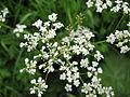 Flower 22 (6976854491).jpg