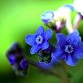 Flower 5231.jpg