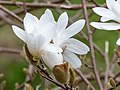 Flower EM1B9093 (49793760026).jpg
