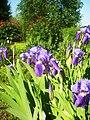 Flower in Prague Botanic Garden.jpg