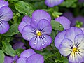 Flowers of Sweden June 2016 11.jpg