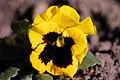 Fmc.nikon.d40 - Flower (by-sa).jpg