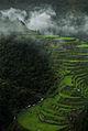 Foggy Ifugao Rice Terraces.jpg