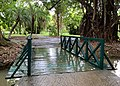 Footbridge at Sir Seewoosagur Ramgoolam Botanical Garden.jpg