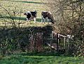 Footbridge near Gospel End, Staffordshire - geograph.org.uk - 616391.jpg