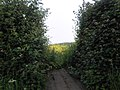 Footpath Through the Hedge - geograph.org.uk - 1339137.jpg