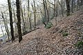 Footpath in woodland on Geraint Hill - geograph.org.uk - 1801327.jpg