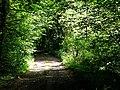 Footpath through woodland - geograph.org.uk - 807137.jpg