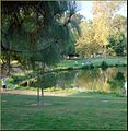 Ford Park, Lower Pond Anglers, Redlands, CA 8-12 (7796896768).jpg