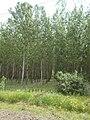Forest, 2019 Pirtó.jpg