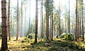 Forest Light (6777766950).jpg