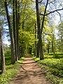 Forest path - panoramio (3).jpg