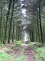Forest track in Roughtor Plantation - geograph.org.uk - 924217.jpg