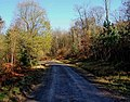 Forestry road, Wyre Forest - geograph.org.uk - 1623262.jpg