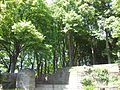 Fort Tryon Linden Terrace.jpg