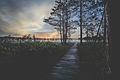 """Fragment ścieżki przyrodniczej """"Dąb Dominik"""" nad jeziorem Moszne.jpg"""