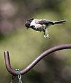 Free Falling (3563221814).jpg