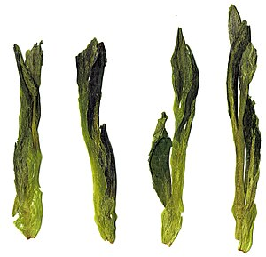Taiping houkui - Image: Fresh Hou Kui Green Tea Leaves
