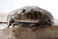 Froggiej.jpg