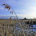 Frost and old barn (6531264617).jpg