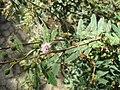 Gardenology.org-IMG 2030 hunt09oct.jpg