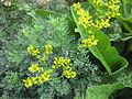 Gardenology.org-IMG 2799 rbgs11jan.jpg
