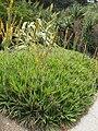 Gardenology.org-IMG 7397 hunt09jun.jpg