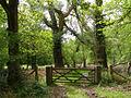 Gateway to Roydon Woods nature reserve - geograph.org.uk - 170495.jpg