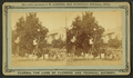 Gathering oranges at Dr. Anderson's grove, from Robert N. Dennis collection of stereoscopic views 2.png