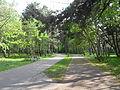 Gdańsk Jelitkowo - nadmorski park.JPG