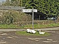 Geese on guard at Croes-Cwtta crossroads. - geograph.org.uk - 1204153.jpg