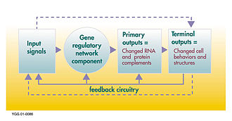 Gene regulatory network - Control process of a gene regulatory network
