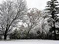 Georgia snow IMG 4502 (38230825394).jpg