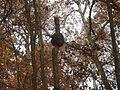 Gfp-wisconsin-governor-dodge-state-park-hornets-nest.jpg