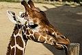 Giraffe (7973352842).jpg