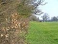 Golf Course, Crondall - geograph.org.uk - 383233.jpg