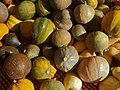Gourds (2261792967).jpg
