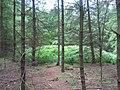 Grafheuvel Nol in 't Bos.jpg