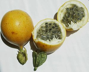 Quechua (geography) - Passion fruit or Granadilla
