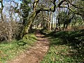 Green lane to Bickleigh - geograph.org.uk - 1242860.jpg