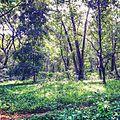 Greenish forest take a break!.jpg