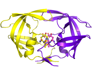 HIV-1 protease - HIV-1 Protease has the classic AspThrGly of Aspartyl Proteases. These amino acids are located at position 25, 26, and 27, and are responsible for the catalytic activity.