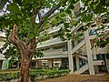 HK 油麻地 Yau Ma Tei 九龍華仁書院 Kowloon Wah Yan College back door campus garden Jan-2014 trees outdoor staircase.JPG