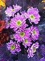 HK CWB 維園年宵市場 Victoria Park Fair - flowers purple Jan-2012 Ip4.jpg